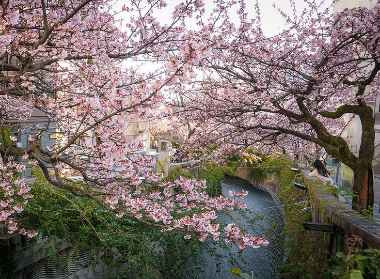 日本热海旅游攻略,带你揭开这座城市的神秘面纱