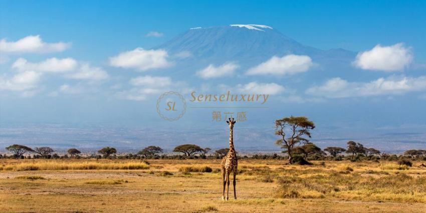 肯尼亚私家游猎~城市之间小飞机往返免去路途疲劳~